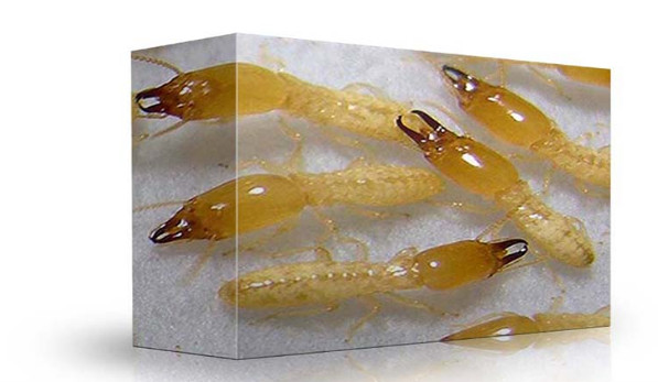 نصائح في مكافحة النمل الابيض