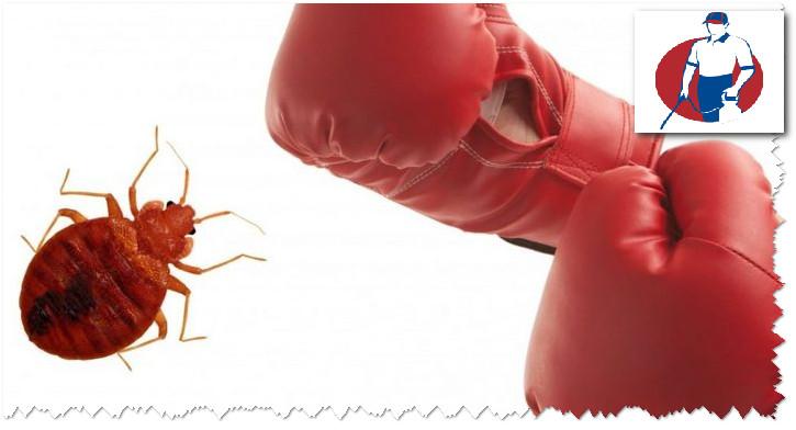 علاج حشرة الكتان بالدمام