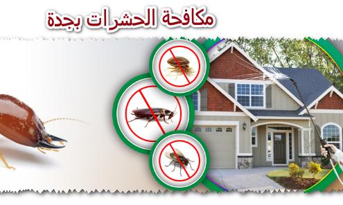 مكافحة الحشرات بجدة