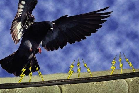 شركة مكافحة الطيور والحشرات بالدمام