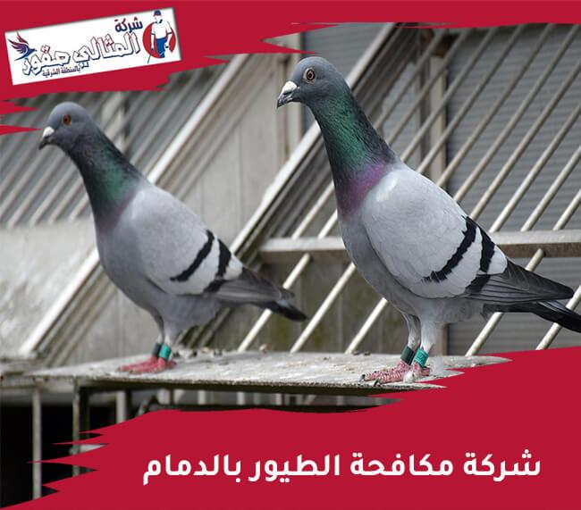 شركة مكافحة الطيور بالدمام